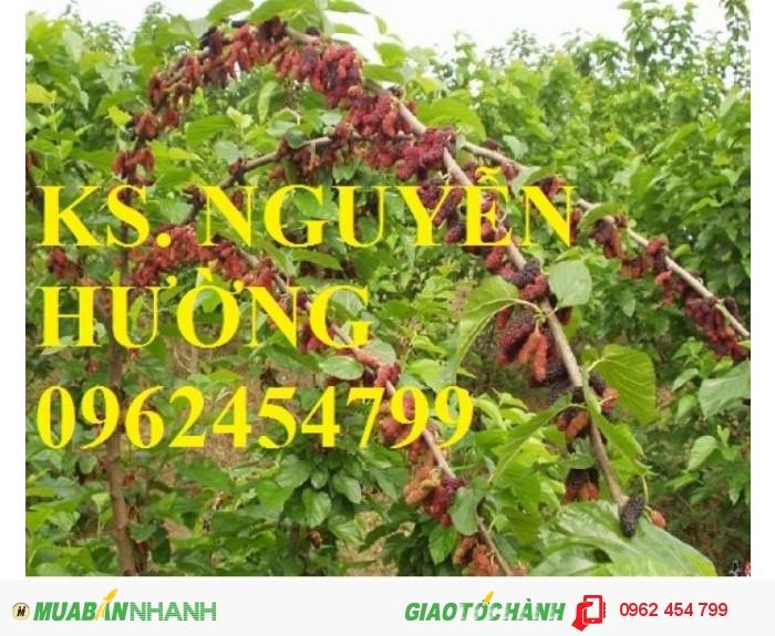 Chuyên cung cấp giống cây dâu quả dài đài loan chất lượng cao1