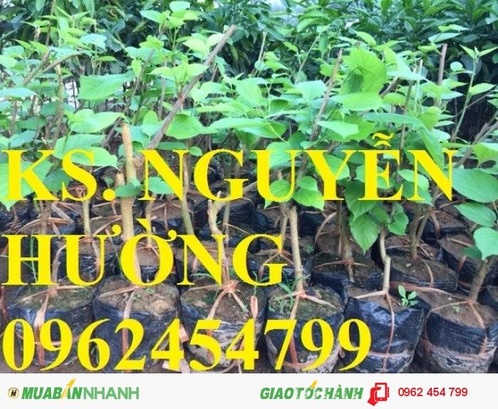 Chuyên cung cấp giống cây dâu quả dài đài loan chất lượng cao2
