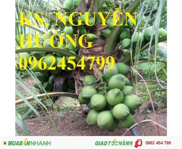 Chuyên cung cấp giống cây dừa xiêm lùn0