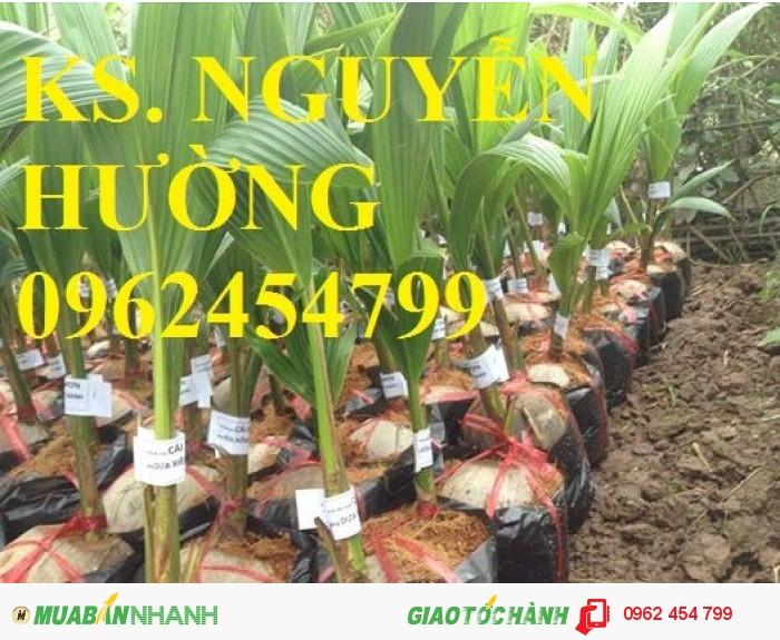 Chuyên cung cấp giống cây dừa xiêm lùn1