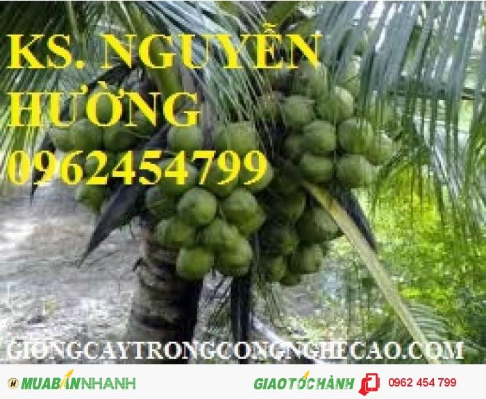 Chuyên cung cấp giống cây dừa xiêm lùn2