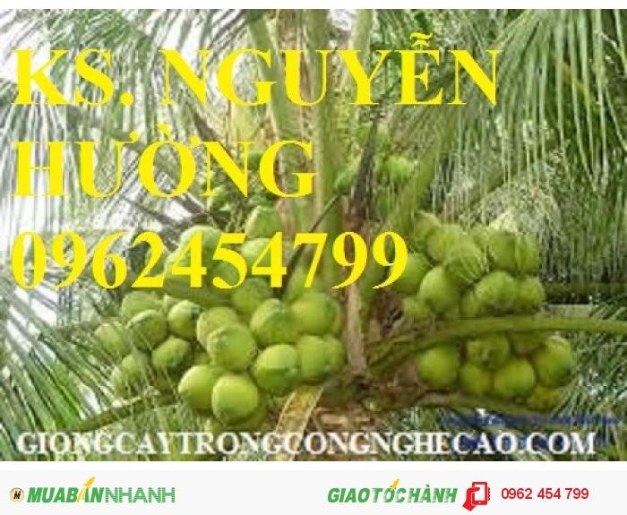 Chuyên cung cấp giống cây dừa xiêm lùn3