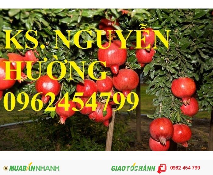 Chuyên cung cấp cây giống lựu1