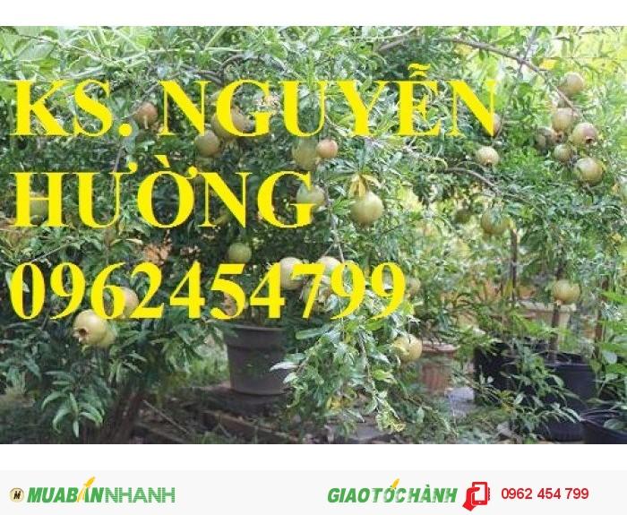 Chuyên cung cấp cây giống lựu3