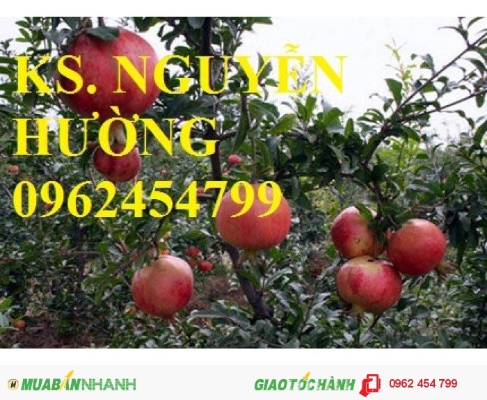 Chuyên cung cấp cây giống lựu4