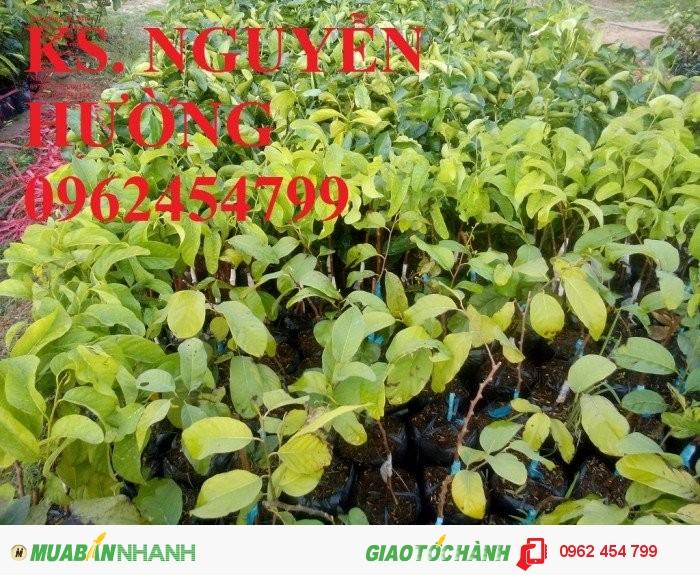 Chuyên cung cấp giống cây na thái lan chuẩn giống1
