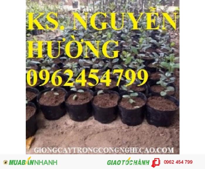 Chuyên cung cấp giống cây ổi tím malaysia1