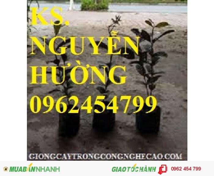 Chuyên cung cấp giống cây ổi tím malaysia3