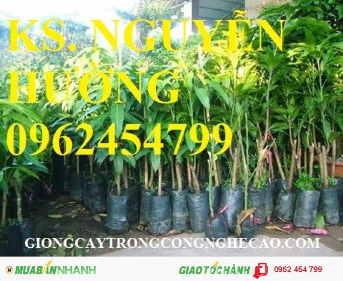 Chuyên cung cấp cây giống xoài thái (xoài thái lan)0