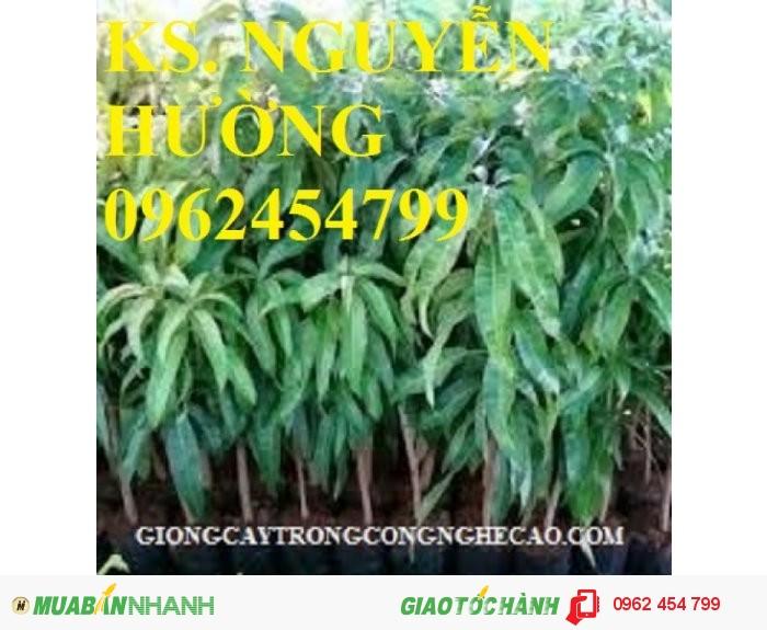 Chuyên cung cấp cây giống xoài thái (xoài thái lan)2