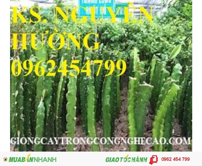 Chuyên cung cấp giống cây thanh long ruột đỏ chất lượng cao1