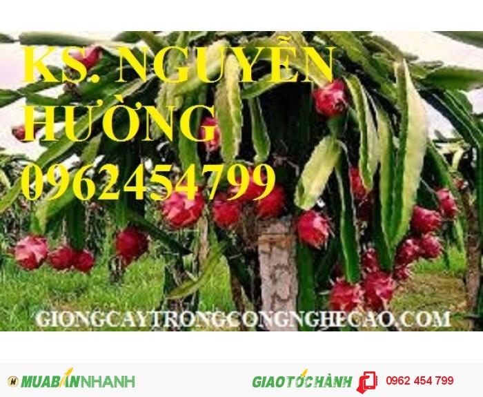 Chuyên cung cấp giống cây thanh long ruột đỏ chất lượng cao4