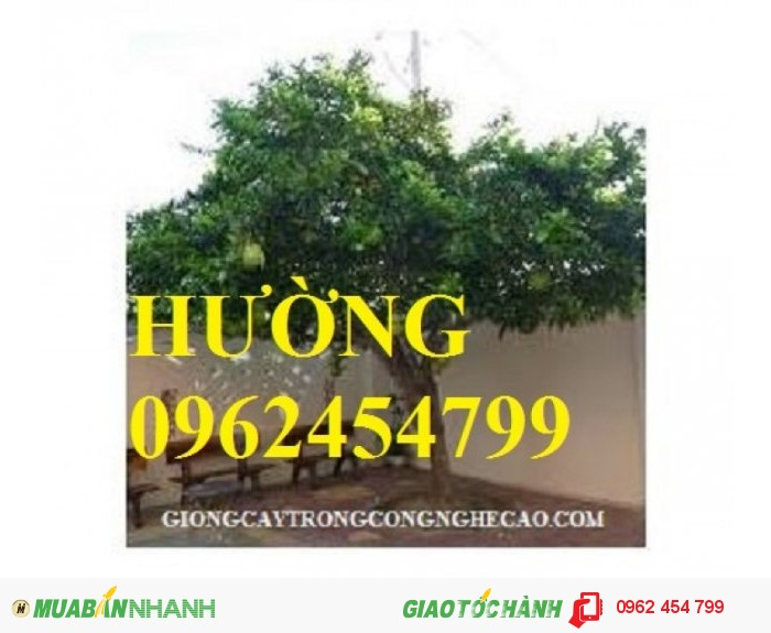 Chuyên cung cấp giống cây đào tiên1
