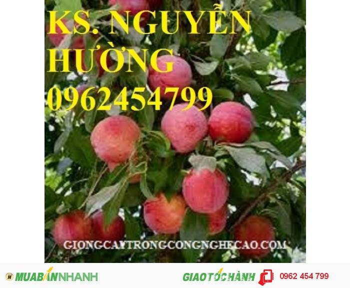 Chuyên cung cấp giống cây mận tam hoa chuẩn giống2
