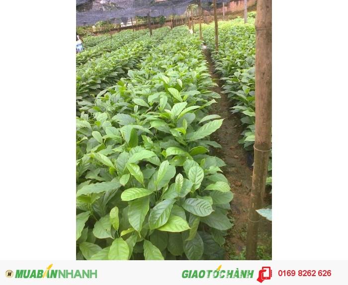 cung cấp các loại hạt giống phục vụ ngành lâm nghiệp4