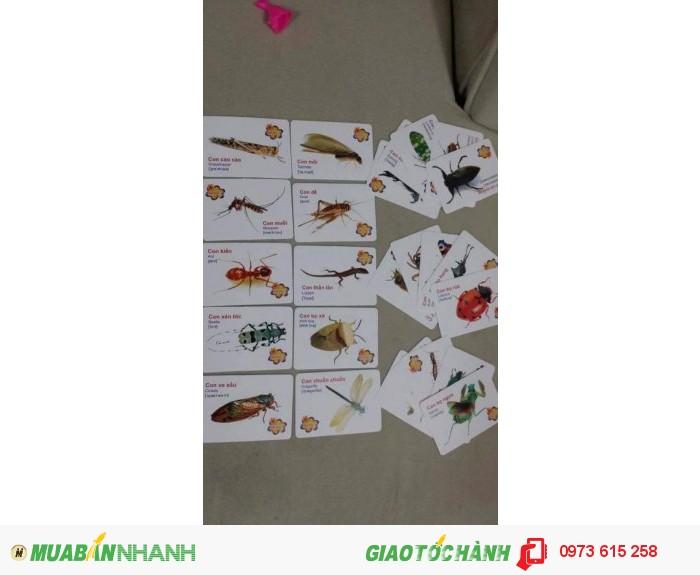 Thẻ Học Tiếng Anh Cho Bé 140k/ 1 Bộ - 1 Bộ : 16 Chủ Đề - 1 Chủ Đề : 25  Thẻ