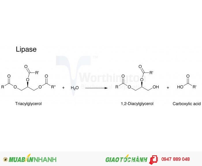 Bán enzyme Lipase hoạt lực cao1