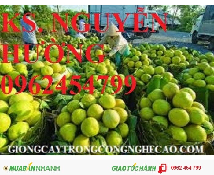Chuyên cung cấp giống cây bưởi năm roi chất lượng cao2