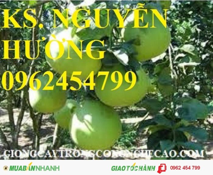 Chuyên cung cấp giống cây bưởi năm roi chất lượng cao3