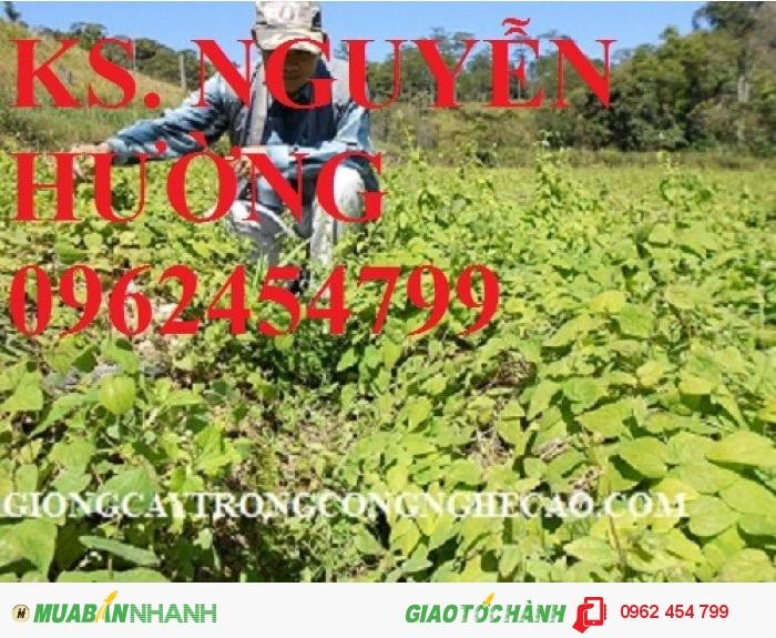 Chuyên cung cấp cây giống đẳng sâm và sản phẩm đẳng sâm chất lượng cao3