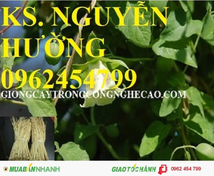 Chuyên cung cấp cây giống đẳng sâm và sản phẩm đẳng sâm chất lượng cao0