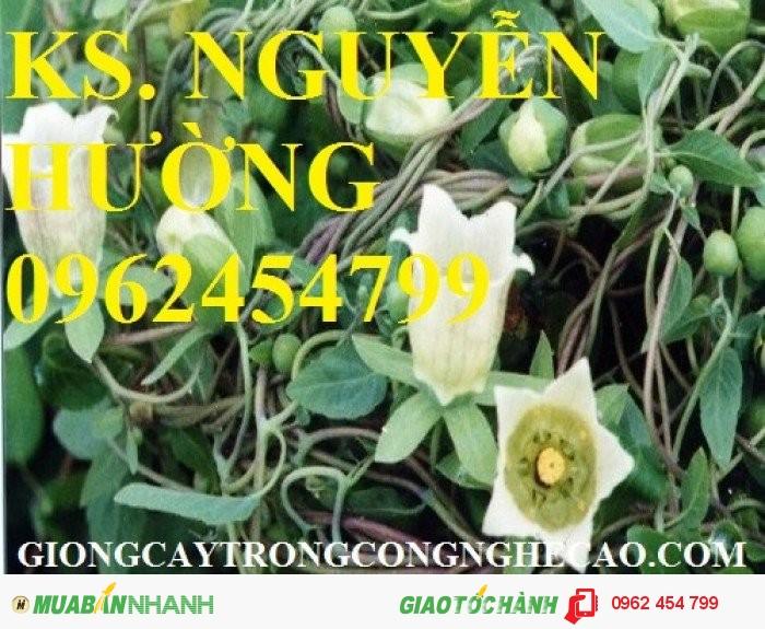Chuyên cung cấp cây giống đẳng sâm và sản phẩm đẳng sâm chất lượng cao2