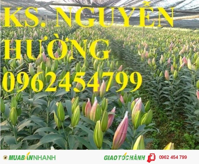 Chuyên cung cấp củ hoa ly ly và hoa ly ly các màu số lượng lớn chất lượng cao2