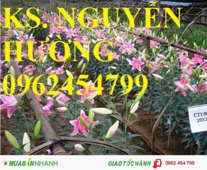 Chuyên cung cấp củ hoa ly ly và hoa ly ly các màu số lượng lớn chất lượng cao0