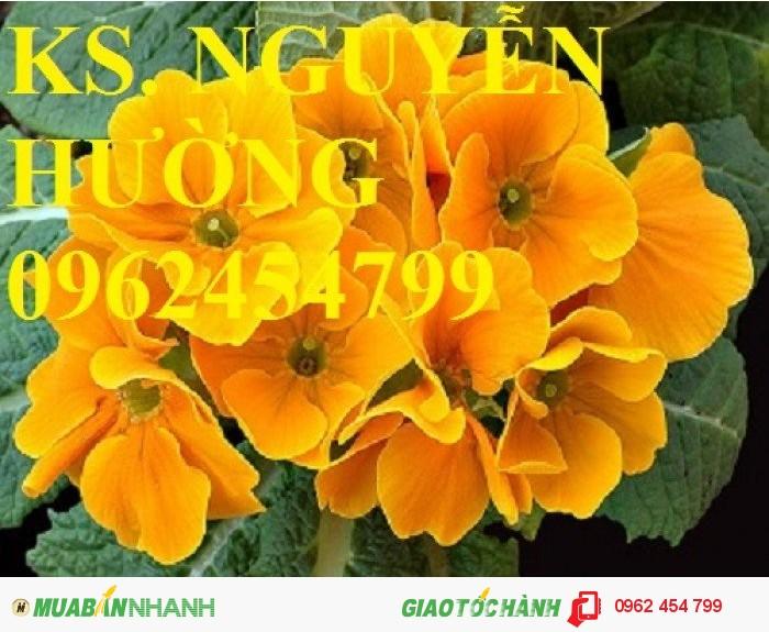 Chuyên cung cấp hạt giống hoa cây cảnh các loại chuẩn giống chất lượng cao0