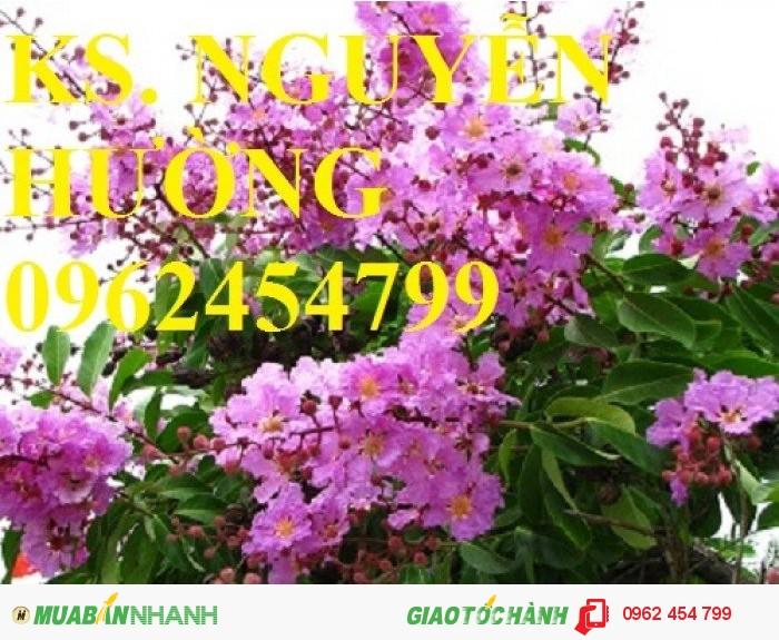 Chuyên cung cấp hạt giống hoa cây cảnh các loại chuẩn giống chất lượng cao1