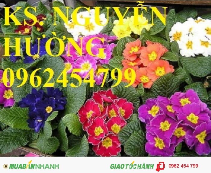 Chuyên cung cấp hạt giống hoa cây cảnh các loại chuẩn giống chất lượng cao2