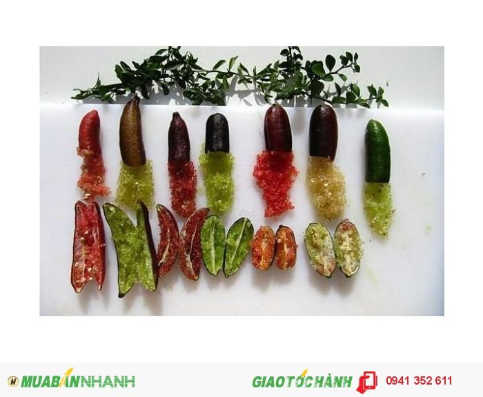 Cây giống chanh ngón tay Thái Lan1