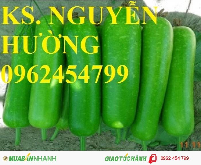 Chuyên cung cấp hạt giống rau củ quả các loại chuẩn giống chất lượng cao0