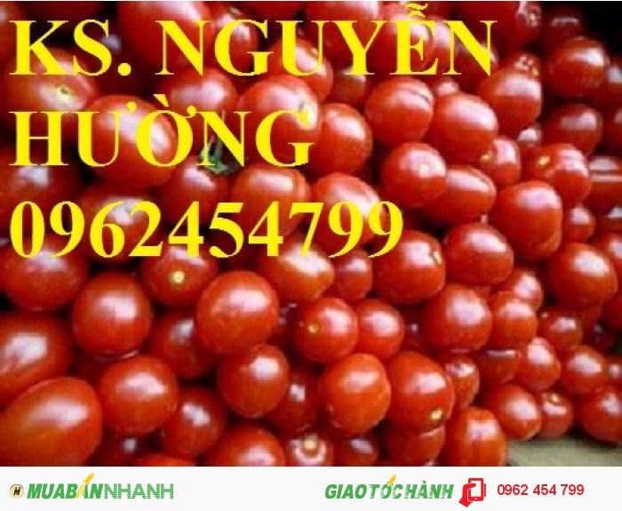 Chuyên cung cấp hạt giống rau củ quả các loại chuẩn giống chất lượng cao3