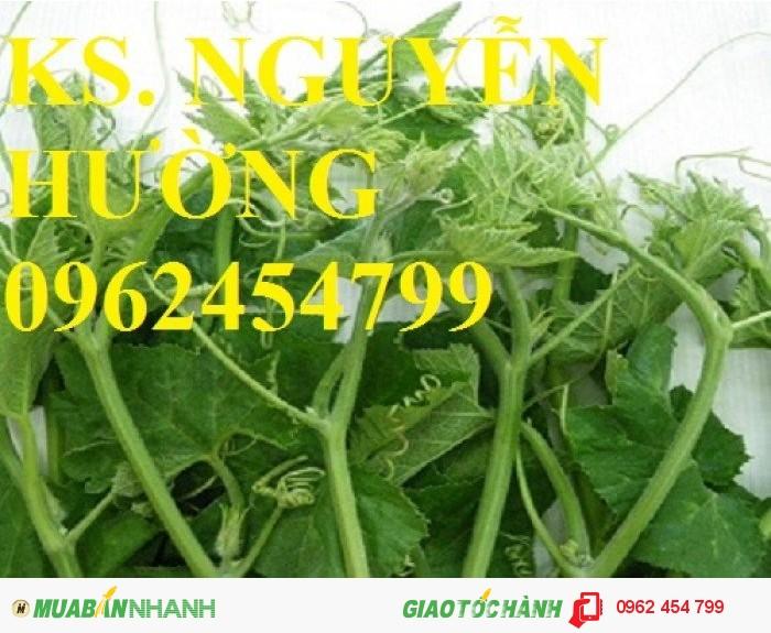 Chuyên cung cấp hạt giống rau củ quả các loại chuẩn giống chất lượng cao1