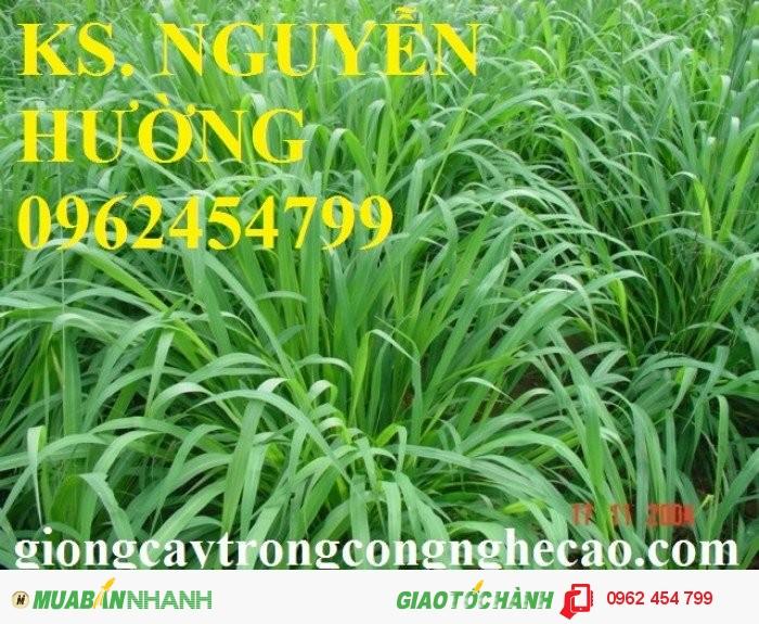 Chuyên cung cấp giống cỏ ghine và hạt giống cỏ ghinê chất lượng cao2