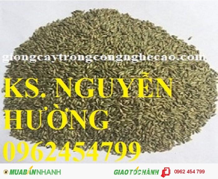 Chuyên cung cấp giống cỏ ghine và hạt giống cỏ ghinê chất lượng cao0