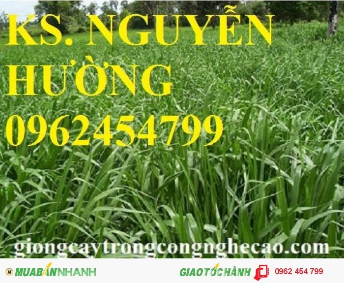 Chuyên cung cấp giống cỏ ghine và hạt giống cỏ ghinê chất lượng cao1