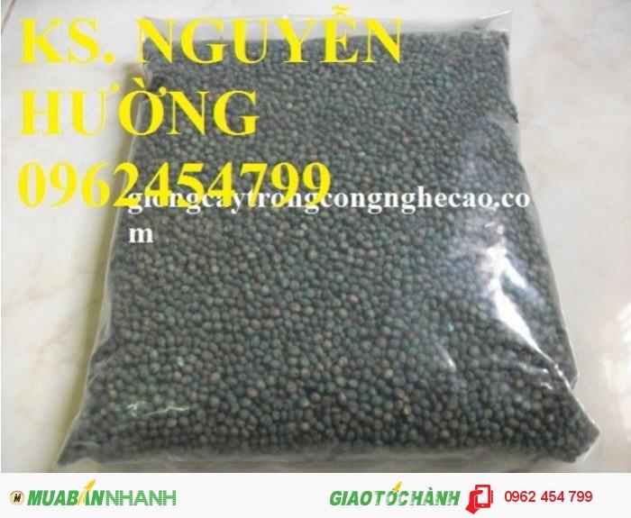 Chuyên cung cấp giống cỏ sweet jumbo và hạt giống cỏ sweet jumbo chất lượng cao0