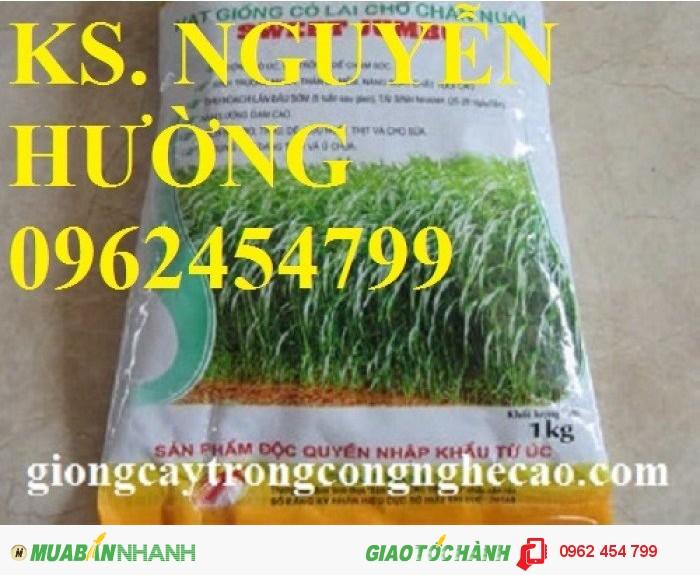 Chuyên cung cấp giống cỏ sweet jumbo và hạt giống cỏ sweet jumbo chất lượng cao3