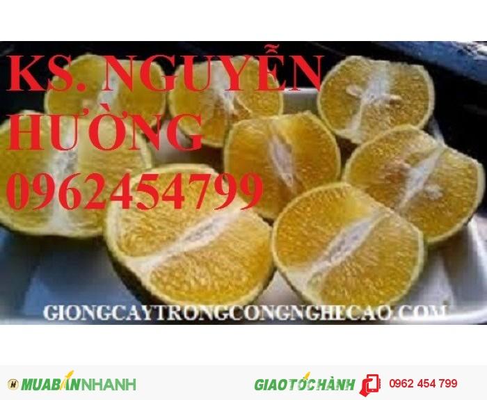 Chuyên cung cấp giống cam sành chất lượng cao4