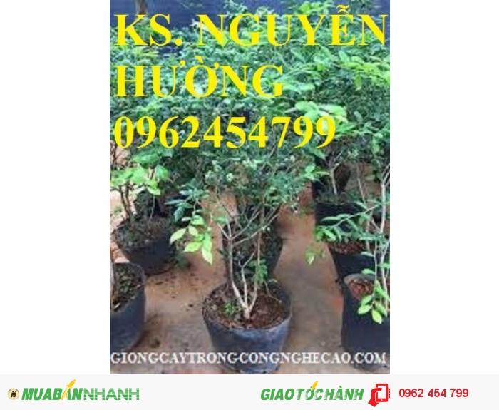 Bán hạt giống và cây giống việt quất chất lượng cao2