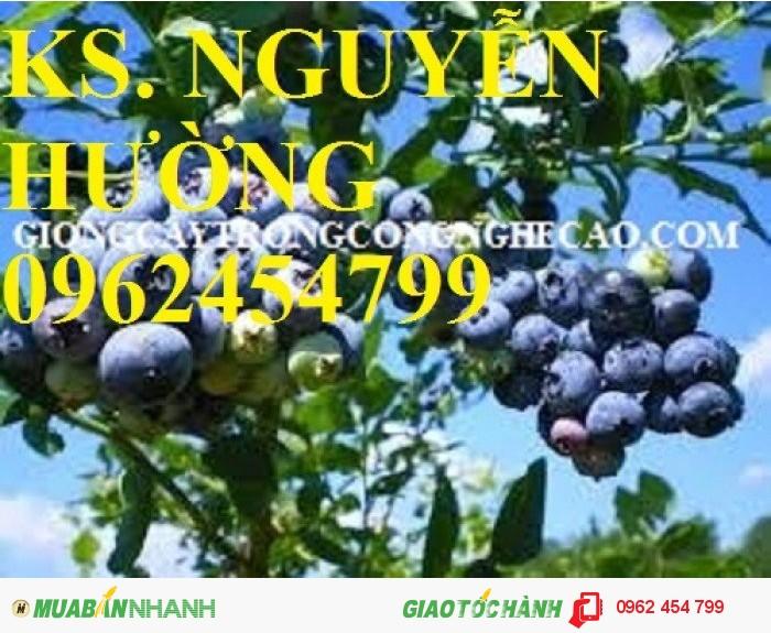 Bán hạt giống và cây giống việt quất chất lượng cao3