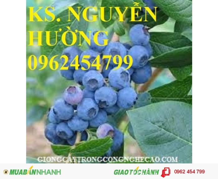 Bán hạt giống và cây giống việt quất chất lượng cao4