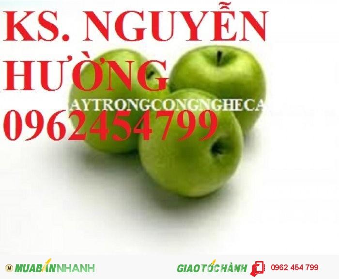 Chuyên cung cấp cây giống táo d28 chất lượng cao1