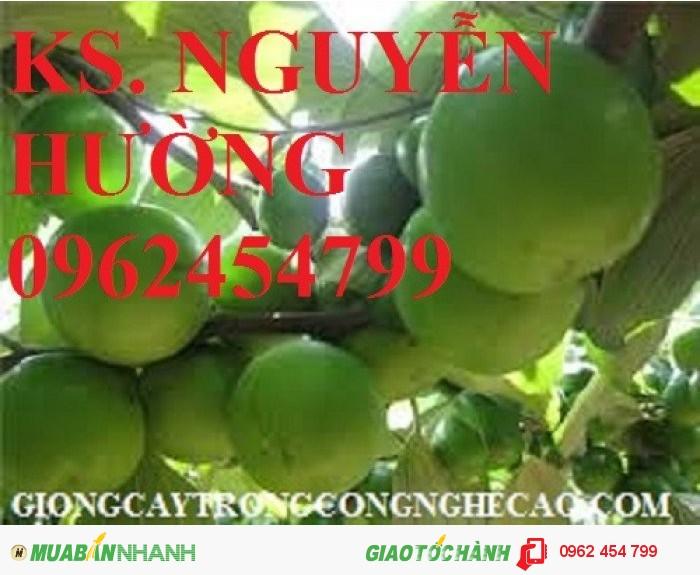 Chuyên cung cấp cây giống táo d28 chất lượng cao4