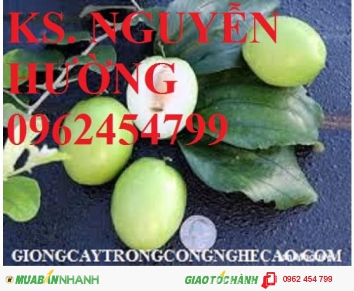 Chuyên cung cấp cây giống táo d28 chất lượng cao0
