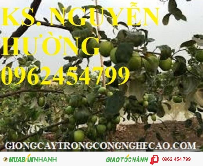 Chuyên cung cấp cây giống táo d28 chất lượng cao2