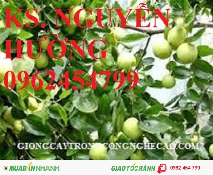 Chuyên cung cấp cây giống táo d28 chất lượng cao3