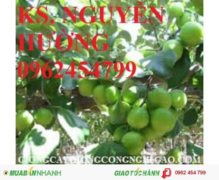 Chuyên cung cấp giống táo ngọt h12 chất lượng cao0